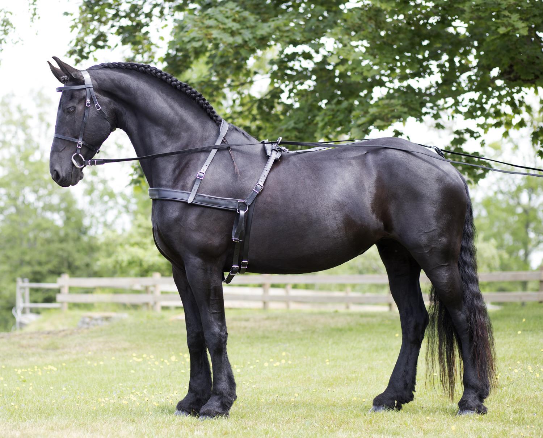 bröstsele till häst