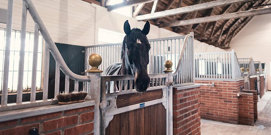 Tips på hur du gör hästen fin inför tävling