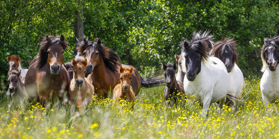 Från hästfolk till hästfolk!