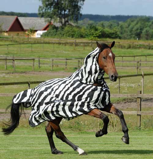 Täcke Buzz-Off Zebra  Zebra/155