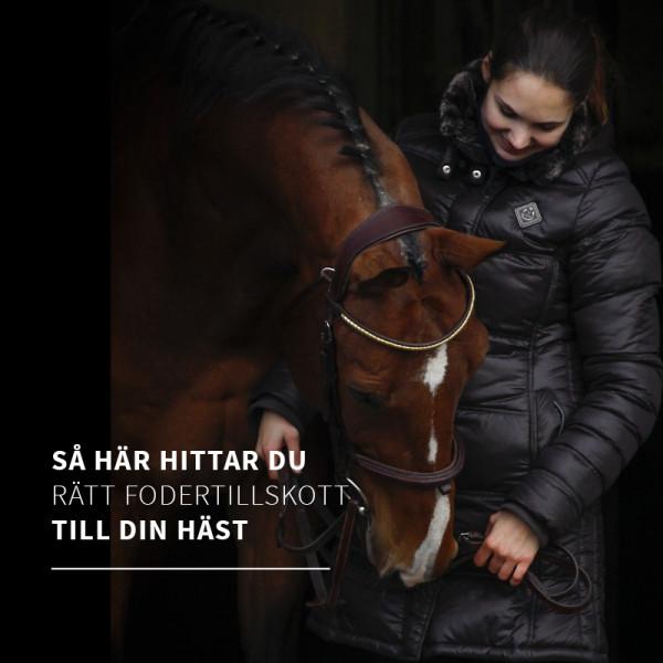 Så väljer du rätt fodertillskott till din häst