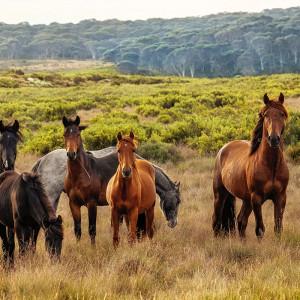 Tips för att välja rätt fodertillskott till din häst