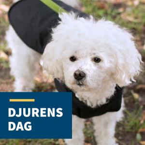 Djurens Dag i Bro-butiken, 3 november