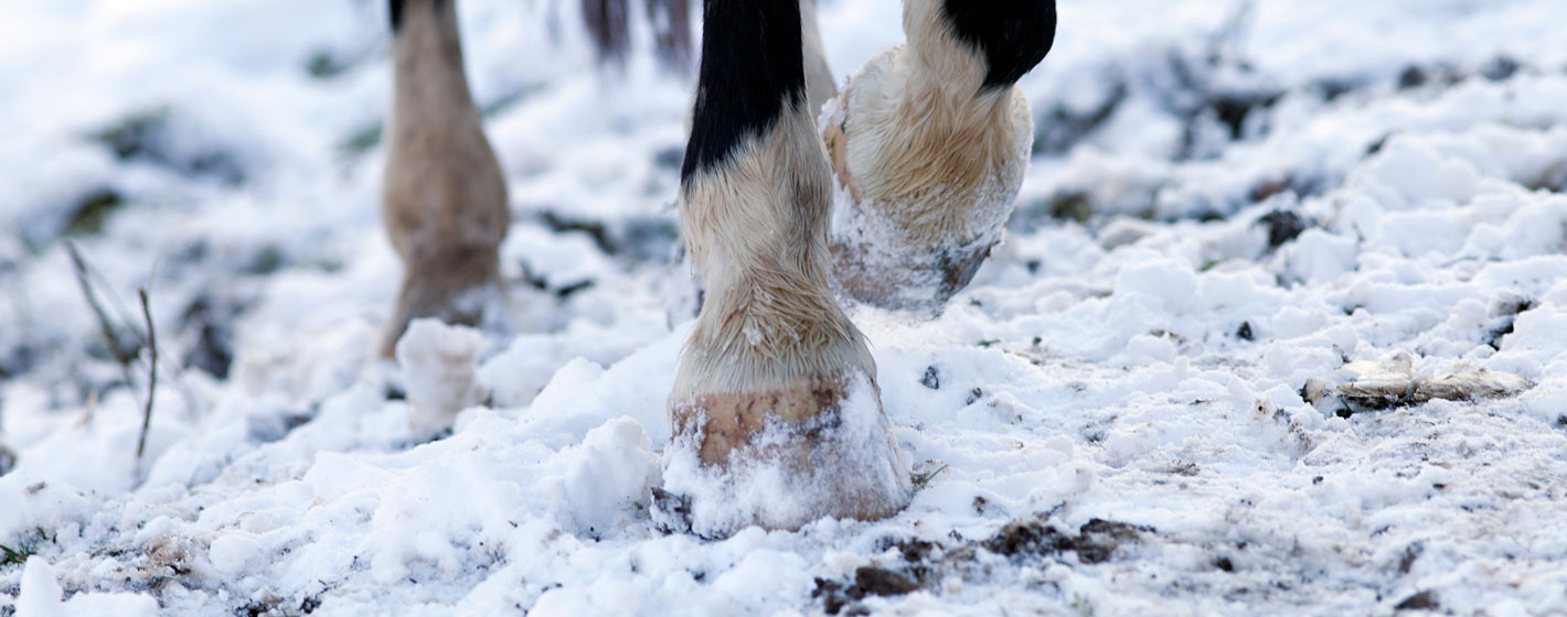 Så minskar du risken för hästen att halka